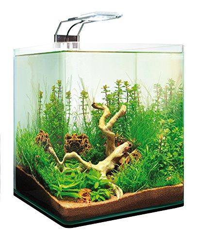 dennerle nanocube completeplus led 20l nano aquarium. Black Bedroom Furniture Sets. Home Design Ideas