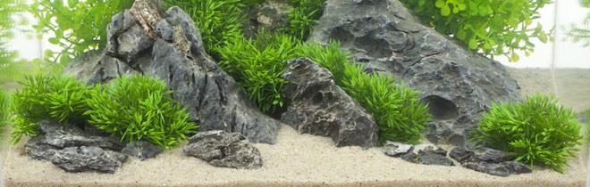 nano aquarium ratgeber rund um das nano aquarium kaufen. Black Bedroom Furniture Sets. Home Design Ideas